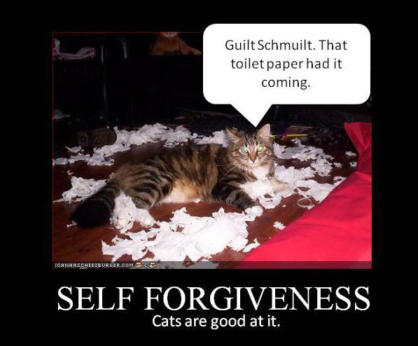 Self forgiveness: Cats are GOOD at it!